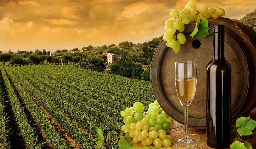 Garrafa de vinho e de fundo plantação de uvas